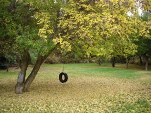 tire-swing-in-autumn-2-1339782-640x480